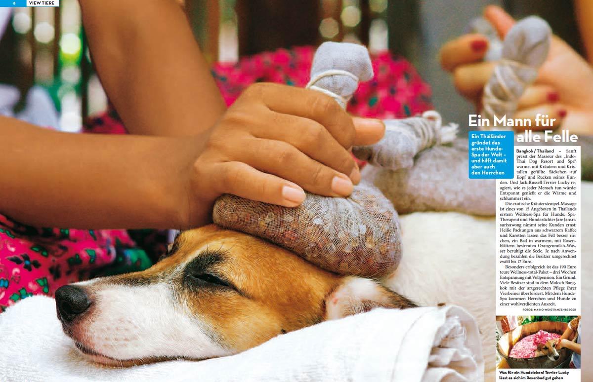 Tiergeschichte: Reportage Wellness für Hunde