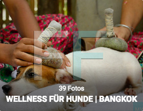 Reportage Wellness für Hunde im Indo Thai Dog Spa