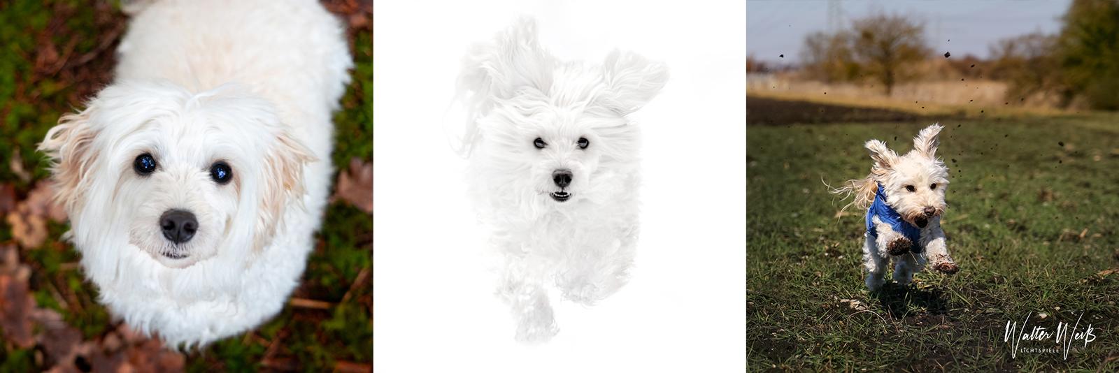 Hundefotografie Germering