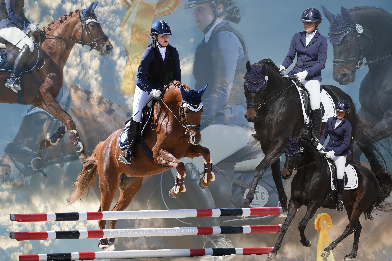 Collage Pferd Reiter
