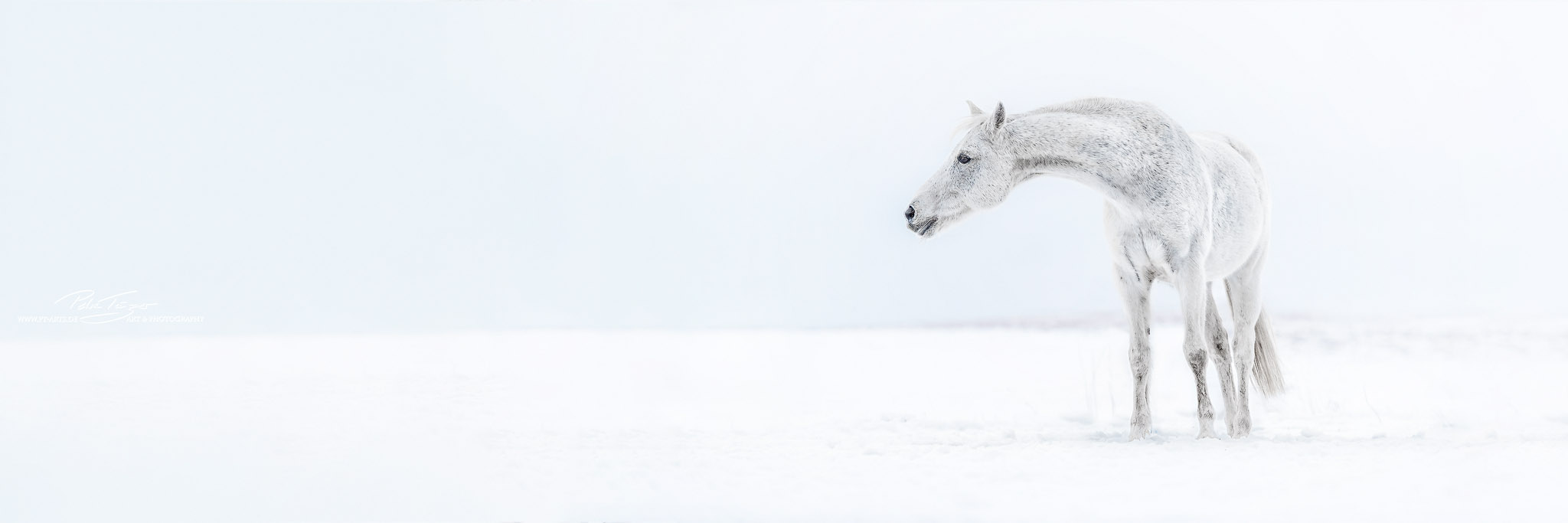 Das Schneepferdchen